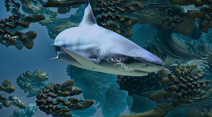 Mơ thấy cá mập đánh đề con gì?