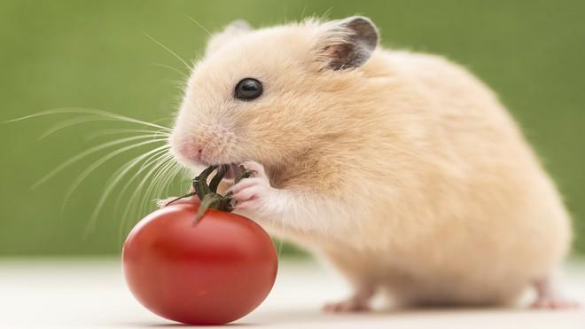 Mơ thấy chuột đánh con gì? Giải mã giấc mơ