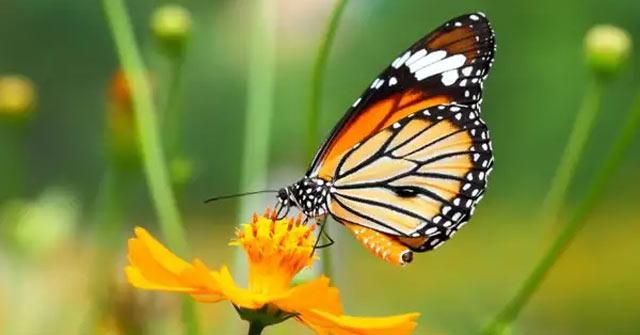 Ngủ mơ thấy con bướm đánh đề bao nhiêu?