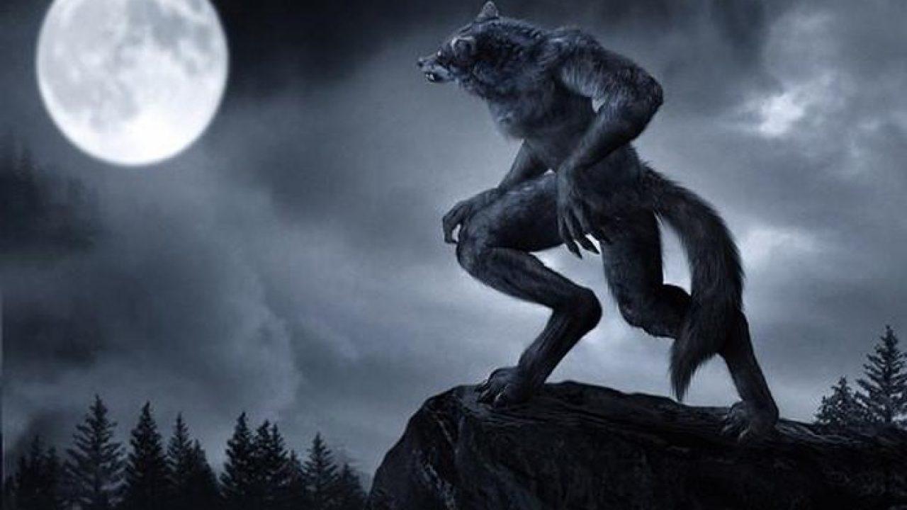 Ý nghĩa khi mơ thấy người sói