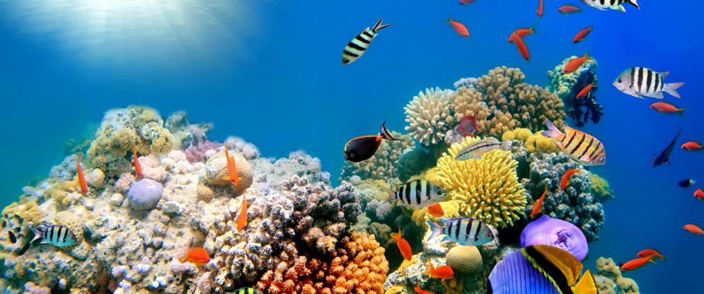 Mơ thấy san hô nên đánh con gì chắc chắn ăn tiền nhất?