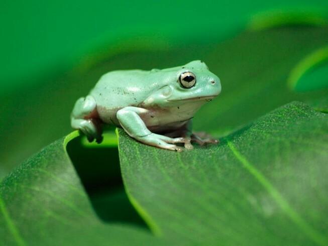 Con ếch xuất hiện trong giấc mơ có ý nghĩa gì đặc biệt không?
